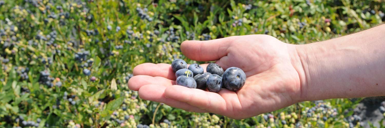Migrola szkółka roślin owocowych lubelskie Lublin