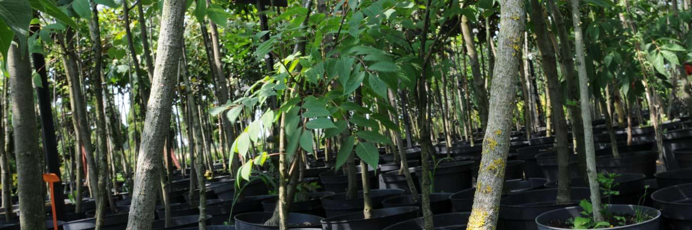 szkółka roślin liściastych lubelskie
